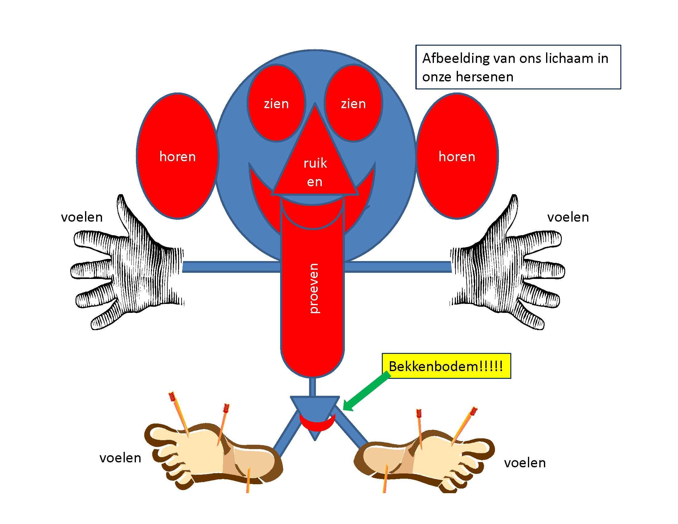 ontspannings-oefeningen voor de bekkenbodem - bekkenbodem online